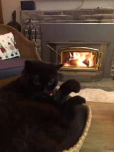 Shadow in her bowl by the fire