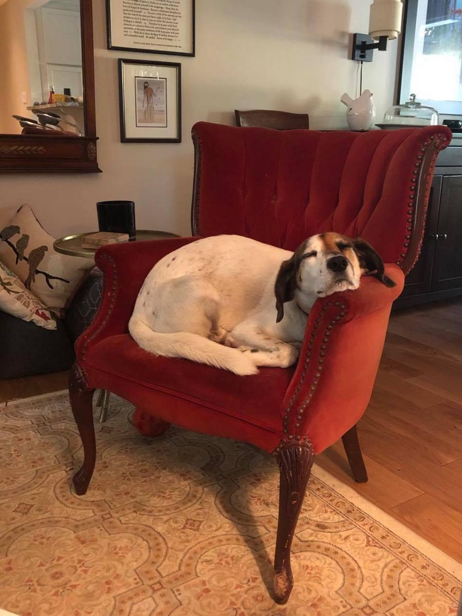 Piper in the red chair